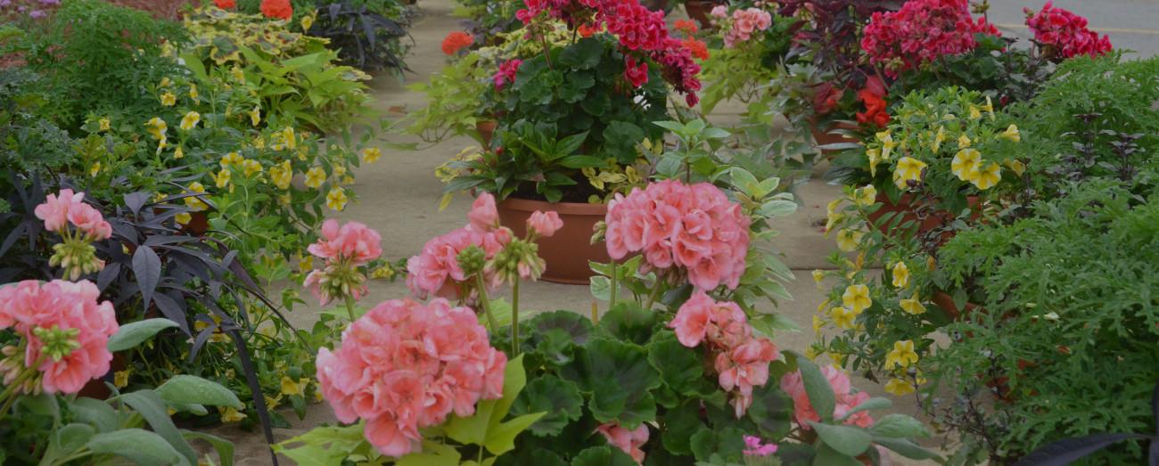 Horticultural Center